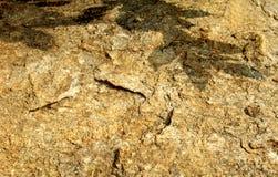 De rotstextuur met bladeren stelt natuurlijke achtergrond in de schaduw Stock Afbeeldingen