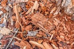 De rottende achtergrond van de boomstomp Stock Afbeeldingen