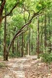 De route van het modderspoor door het dichte bos van Jim Corbett Royalty-vrije Stock Afbeeldingen