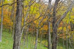 De route van de Nikkotrekking in de herfst, Japan royalty-vrije stock afbeeldingen
