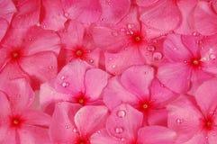 De roze achtergrond van Bloemen Royalty-vrije Stock Foto's