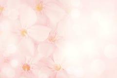 De roze Achtergrond van de Bloem Stock Foto