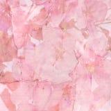 De roze achtergrond van de kersenbloesem Stock Foto