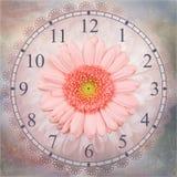 De roze achtergrond van de gerberabloem geïsoleerde klok stock illustratie
