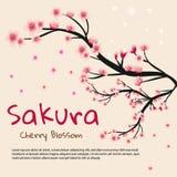 De roze achtergrond van de kersenbloesem De bloesemachtergrond van de kers Royalty-vrije Stock Afbeelding