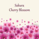 De roze achtergrond van de kersenbloesem De bloesemachtergrond van de kers Royalty-vrije Stock Afbeeldingen