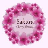 De roze achtergrond van de kersenbloesem De bloesemachtergrond van de kers Stock Foto