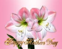 De roze Amaryllis van de Kaart van de Dag van moeders Stock Afbeeldingen