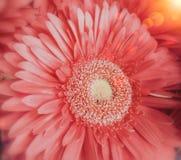 De roze bloem sluit mening royalty-vrije stock foto