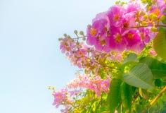 De roze bloemen en de mooie groene bladeren hebben een achtergrond van zonlicht en de hemel van de zomer stock afbeelding