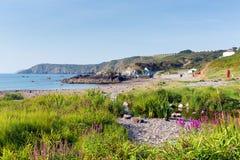 De roze bloemen Kennack schuurt strand Cornwall Engeland van het de kustzuidwesten van de Hagediserfenis met blauwe hemel op een  Stock Fotografie