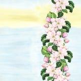 De roze bloemen van de appel Naadloze bloemengrens Het botanische watercolour geschilderde scherpen op kleurrijke achtergrond royalty-vrije illustratie