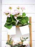 De roze bloemen verfraaien de muren royalty-vrije stock foto