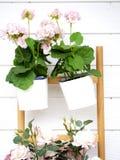 De roze bloemen verfraaien de muren royalty-vrije stock fotografie