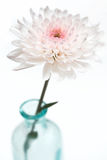 De roze bloesem van de Bloem in vaas Stock Afbeelding