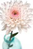De roze bloesem van de Bloem in vaas Royalty-vrije Stock Foto