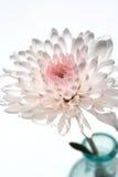 De roze bloesem van de Bloem in vaas Royalty-vrije Stock Afbeeldingen