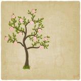 De roze boom van de bloemenbloesem Royalty-vrije Stock Afbeelding