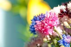 De roze close-up van de bloemkorenbloem stock afbeelding