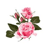 De roze elegante kaart Een de lente decoratief boeket van roze rozen bloeit vector illustratie