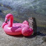 De roze Flamingo zwemt Vlotter Geïsoleerde stock fotografie