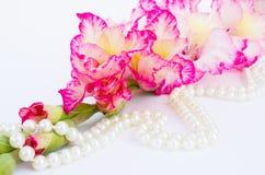 De roze gladiool is op witte achtergrond Royalty-vrije Stock Foto