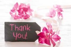 De roze Hydrangea hortensiabloesem, Tekst dankt u Royalty-vrije Stock Foto's