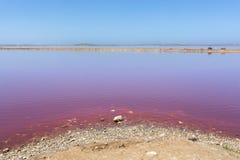 De roze Lagune van de meerhut bij Haven Gregory, Westelijk Australi?, Australi? royalty-vrije stock fotografie