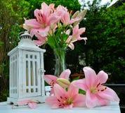 De roze lelielente Stock Afbeelding