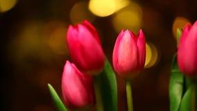 De roze lengte van tulpen gouden bokeh hd stock videobeelden