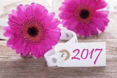 De roze Lente Gerbera, Etiket, Tekst 2017 Stock Foto