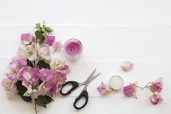 De roze lokale flora van bloemenbougainvillea van Azië op wit royalty-vrije stock afbeelding