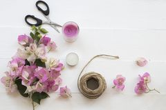 De roze lokale flora van bloemenbougainvillea van Azië op wit stock foto