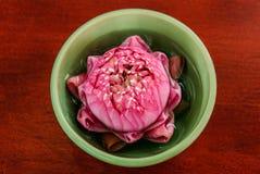 De roze lotusbloem Stock Foto's