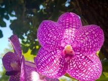 De roze orchideeën in het zonlicht royalty-vrije stock afbeeldingen