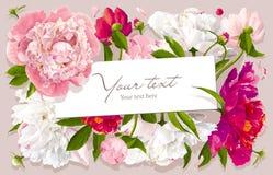 De roze, rode en witte kaart van de pioengroet Stock Afbeeldingen