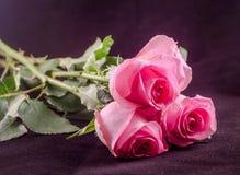 De roze rozen, sluiten omhoog Royalty-vrije Stock Fotografie
