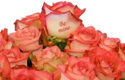 De roze rozen van het boeket Royalty-vrije Stock Afbeeldingen