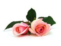 De roze rozen van het huwelijk Stock Afbeeldingen