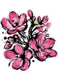 De roze schets van de lente kleurt drie knoppen Royalty-vrije Stock Afbeeldingen