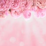 De roze Slinger van Rozen Royalty-vrije Stock Foto