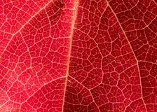 De roze Textuur van het Blad stock foto