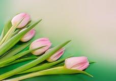 De roze tulpenbloemen en de de giftdoos van de hartvorm, soort Tulipa, familie Liliaceae op groen lichtachtergrond, sluiten omhoo Royalty-vrije Stock Foto
