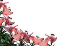 De roze uitnodiging van de Grens van Lelies Bloemen Royalty-vrije Stock Afbeeldingen