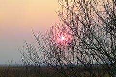 De roze zon in de mist glanst door de leafless takken stock foto