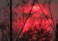 De roze zon verwarde in de bomen royalty-vrije stock afbeelding