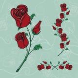 De rozen overhandigen getrokken realistische schets Royalty-vrije Stock Fotografie
