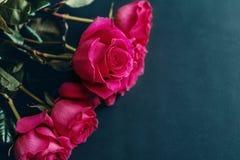 De rozen sluiten omhoog Mooie rozen op donkere achtergrond Stock Foto's