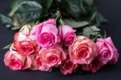 De rozen sluiten omhoog Mooie rozen op donkere achtergrond Royalty-vrije Stock Foto's