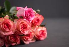 De rozen sluiten omhoog Mooie rozen op donkere achtergrond Stock Afbeelding